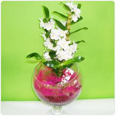 orquidea em jarra de vidro