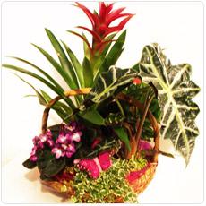 cesto de flores naturais