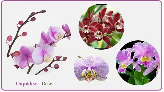 orquideas-dicas