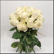 molho rosas brancas